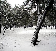 blanketed snowy field by natasha007