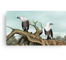 Griffon Vultures Canvas Print