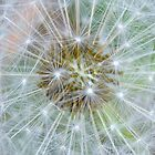 Seed Wishes by gmws