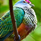Rose-crowned Fruit Dove by Renee Hubbard Fine Art Photography