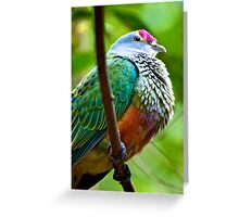Rose-crowned Fruit Dove Greeting Card