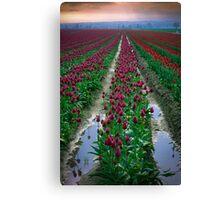 Tulips & Soil Canvas Print