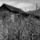 Day 22 by KatsEyePhoto