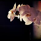 Orchid Flowers by petejsmith