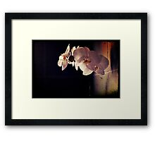 Orchid Flowers Framed Print