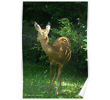 My deer Poster