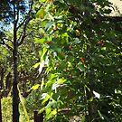Trailing Bean Plants by Bearie23