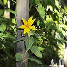 Flower In The Garden-2 by Bearie23