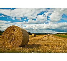 Hay Fields of Heyshott Photographic Print