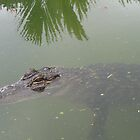 just waiting around for lunch...........Innisfail, North Queensland, Australia by myhobby