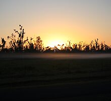 here comes the sun - after Cyclone Yasi, Kennedy, North Queensland, Australia by myhobby