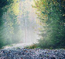 30.9.2011: Road to Autumn by Petri Volanen