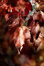 Autumn Rich by KBritt