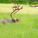 Caribou by Gary L   Suddath