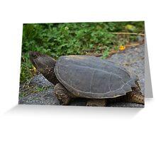 Turtle study 1 Greeting Card