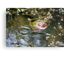 Snapping turtle study 3 Metal Print