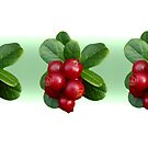Cowberry by Irina777