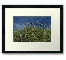Dune Grass landscape Framed Print