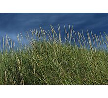 Dune Grass landscape Photographic Print