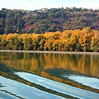 Autumn along the Rhone by Laurel Talabere