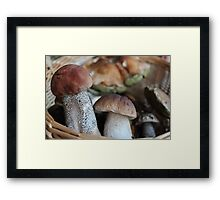 Favourite Mushrooms Framed Print