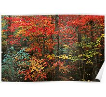 AUTUMN HARDWOOD FOREST Poster