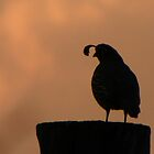 Guardian Quail Silhouette by © Betty E Duncan ~ Blue Mountain Blessings Photography