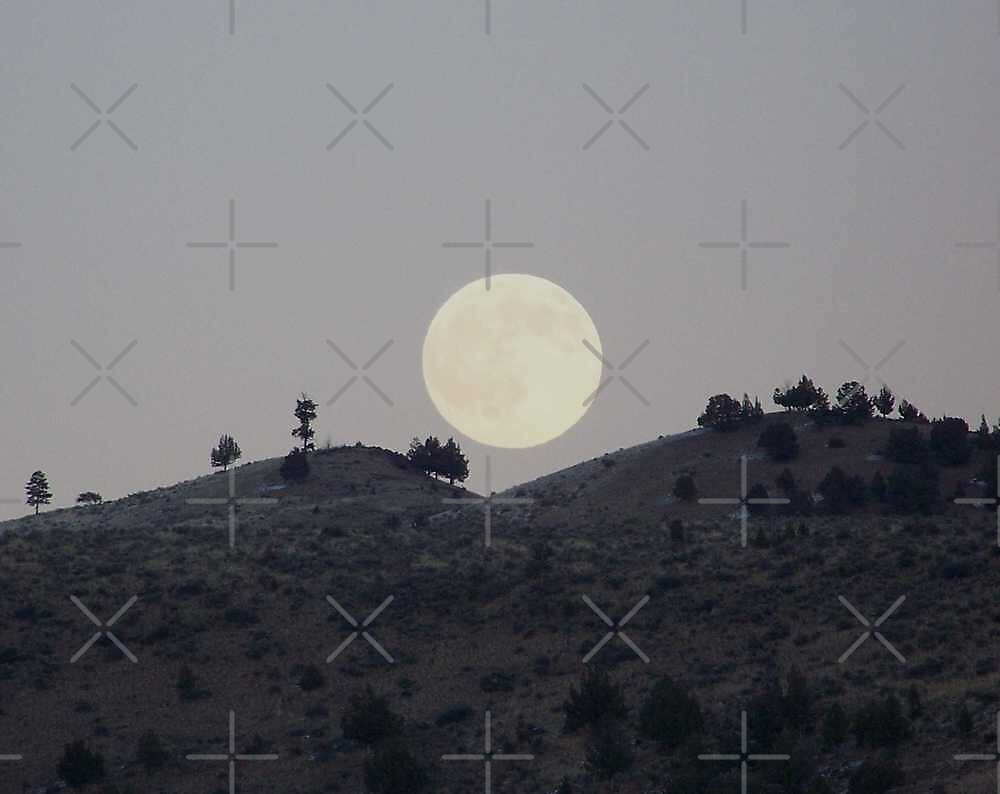 Silhouettes of a Harvest Moon by BettyEDuncan