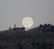 Silhouettes of a Harvest Moon by © Betty E Duncan ~ Blue Mountain Blessings Photography