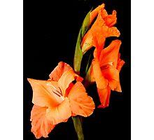 Orange on Black 2 Photographic Print