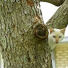 Tree Climber Beige Cat Watching From The Crotch of the Tree by MeMeBev