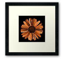 Orange flower with water drops Framed Print