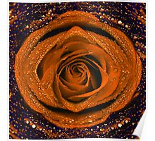 Orange rose with water drops  Poster
