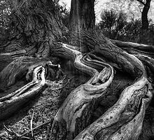 UpRooted by Bob Larson