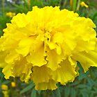Yellow Perfection by Richard H. Jones