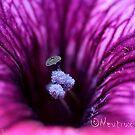 Pollen blue by Neutro
