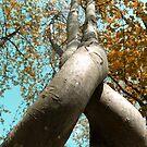 Twisted Autumn Tree  by anjafreak