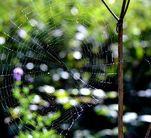 Caught in your web by AmeliaStewart