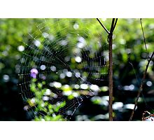 Caught in your web Photographic Print