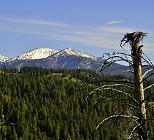 EAGLE NEST IN SNOWY MOUNTAINS by Diana Miller