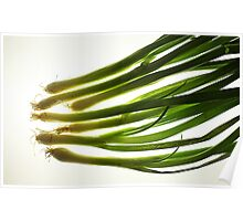 Green onions Poster