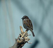 BIRD ON A STICK by Diana Miller