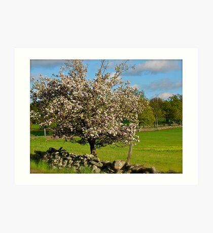 Apple blossoms in Spring Art Print