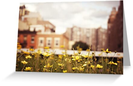 Flowers Along the High Line - New York City by Vivienne Gucwa