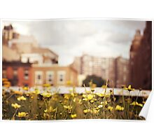 Flowers Along the High Line - New York City Poster