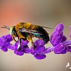 Carpenter Bee with the Big Green Eyes by TJ Baccari Photography