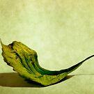 Leaf by Margi