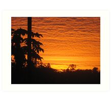 paw paw trees and sunrise - Kennedy, North Queensland, Australia Art Print