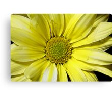yellow flower in close up Canvas Print