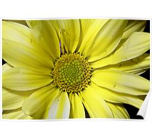 yellow flower in close up Poster